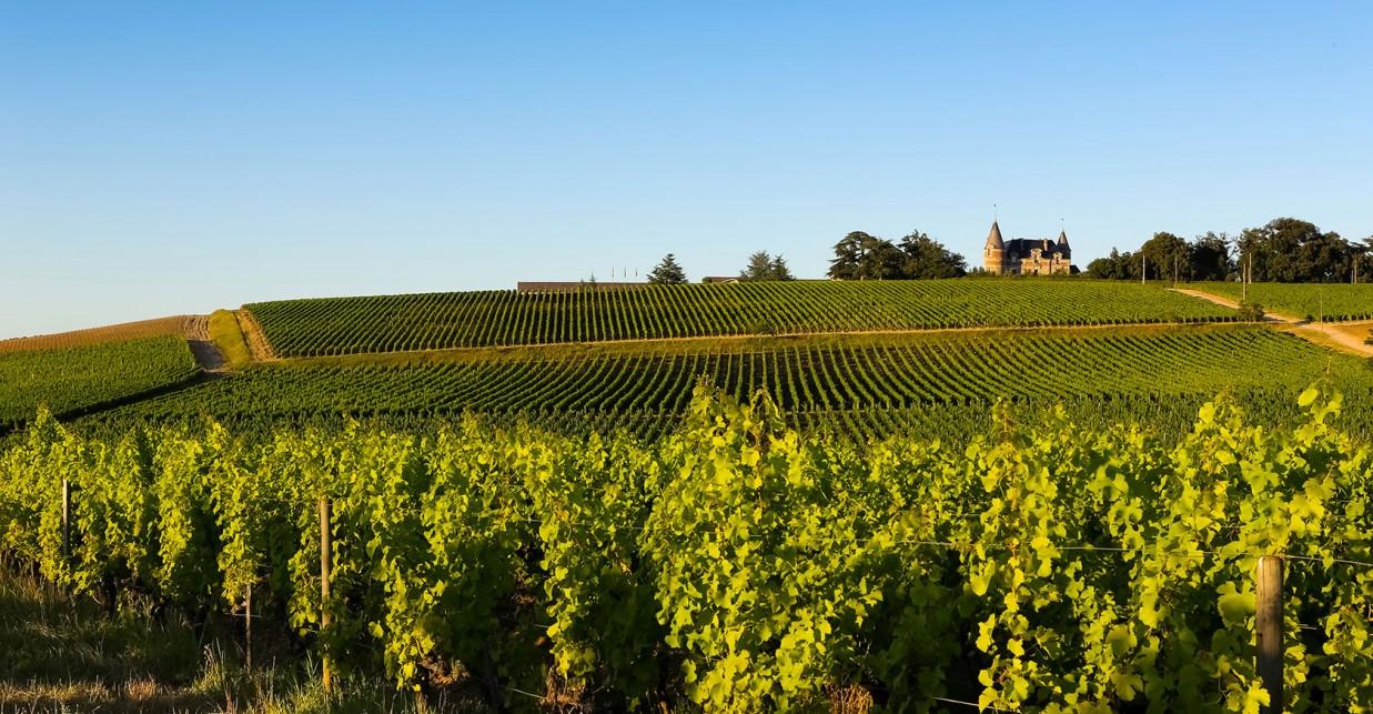 Paysage viticole